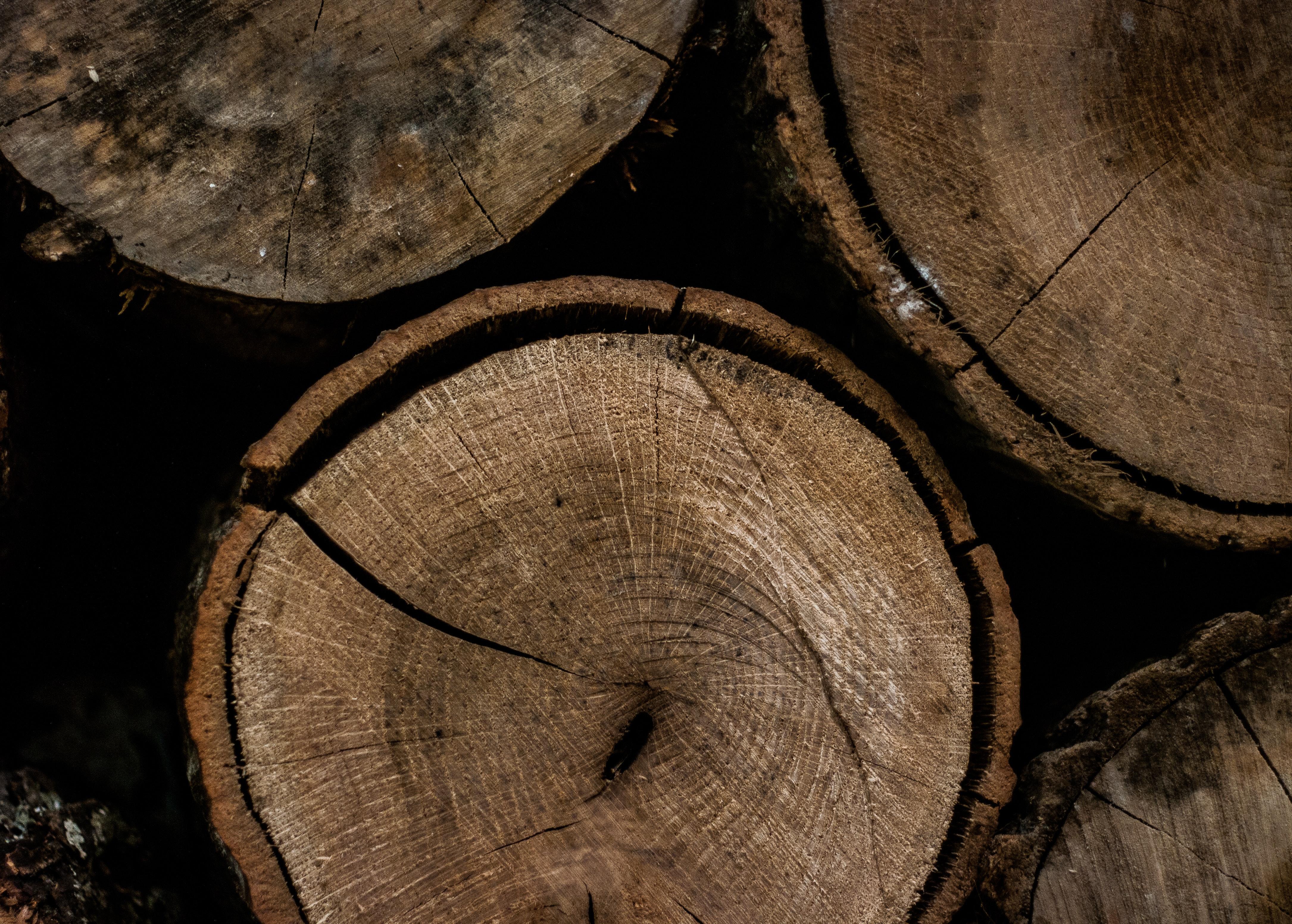 bark-brown-chopped-794804