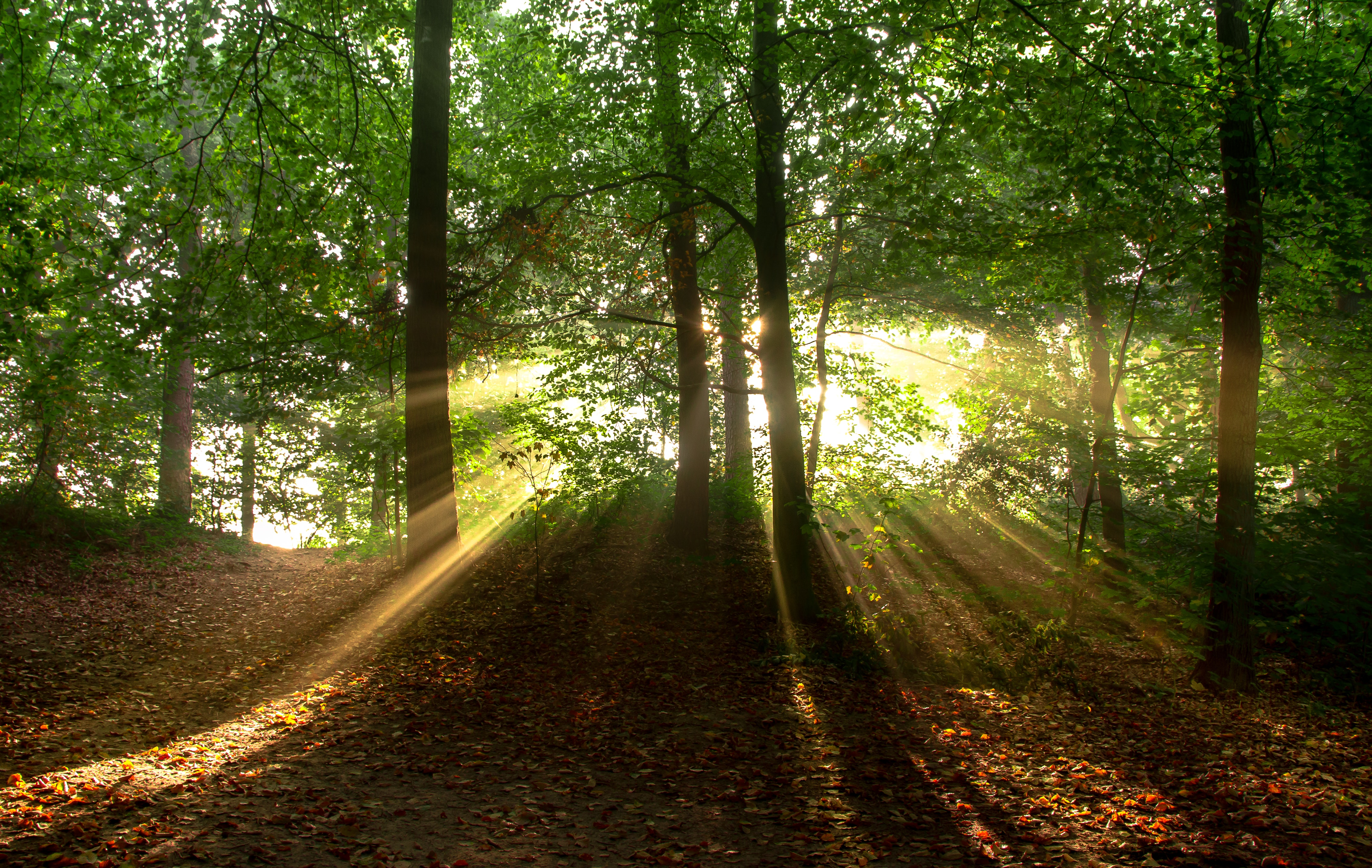forest-landscape-leafs-11435